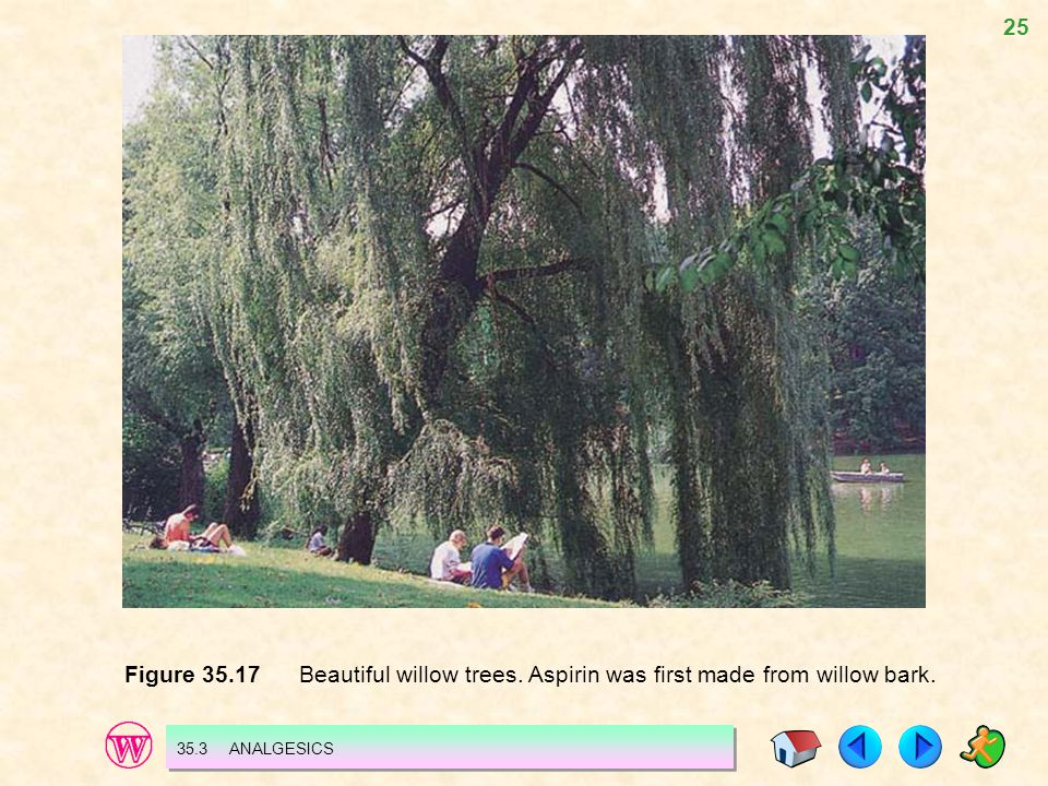 25 Figure 35.17 Beautiful willow trees. Aspirin was first made from willow bark. 35.3 ANALGESICS