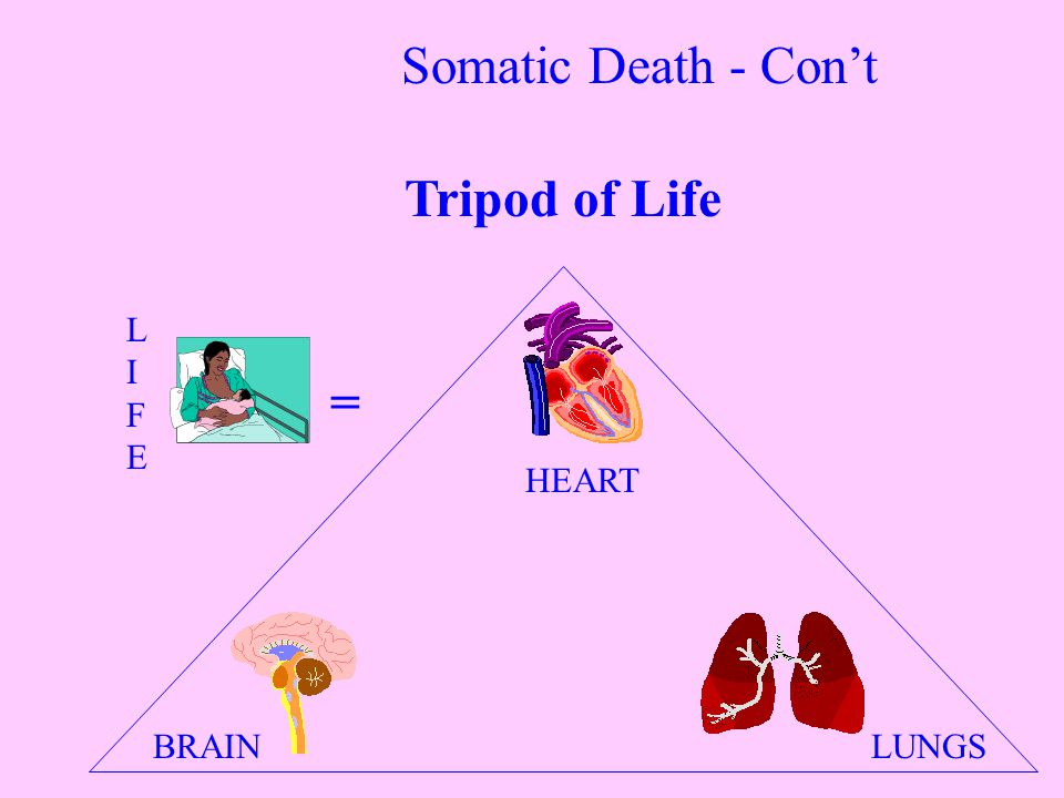 LUNGS HEART BRAIN = LIFELIFE Tripod of Life Somatic Death - Con't