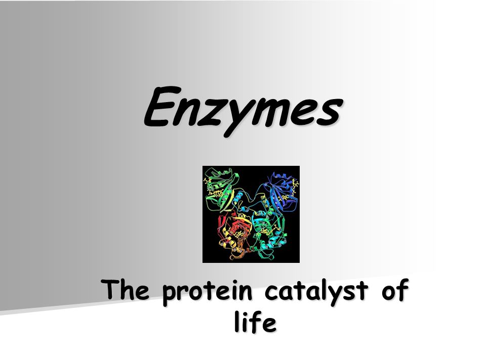 Enzymes The protein catalyst of life