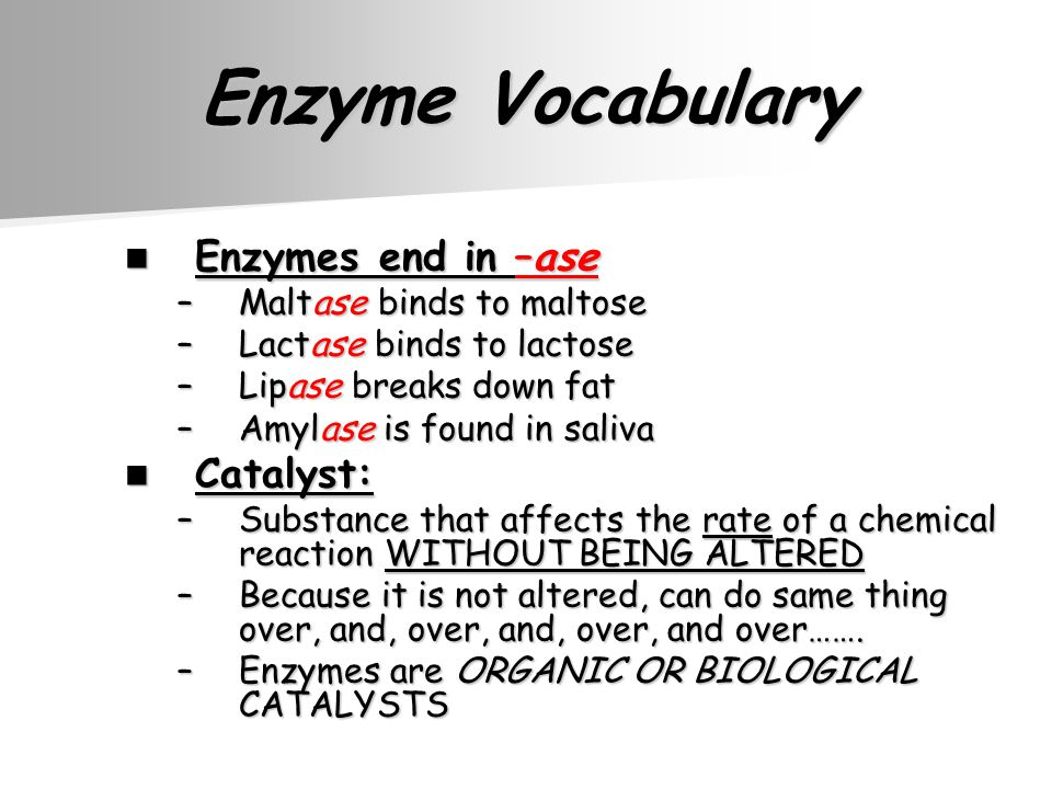 Enzyme Vocabulary Enzymes end in –ase Enzymes end in –ase –Maltase binds to maltose –Lactase binds to lactose –Lipase breaks down fat –Amylase is found in saliva Catalyst: Catalyst: –Substance that affects the rate of a chemical reaction WITHOUT BEING ALTERED –Because it is not altered, can do same thing over, and, over, and, over, and over…….