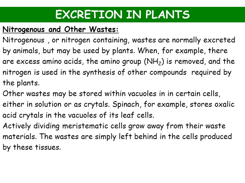 EXCRETION IN PLANTS Nitrogenous and Other Wastes: Nitrogenous, or nitrogen containing, wastes are normally excreted by animals, but may be used by pla