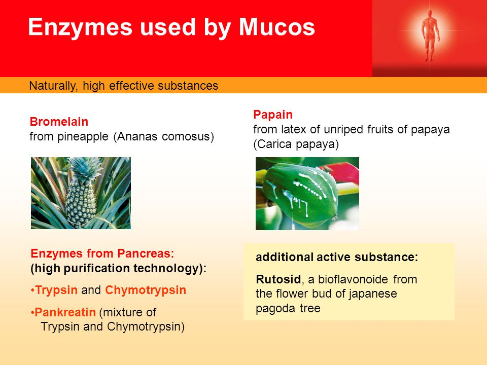 Enzymes used by Mucos Bromelain from pineapple (Ananas comosus) Enzymes from Pancreas: (high purification technology): Trypsin and Chymotrypsin Pankreatin (mixture of Trypsin and Chymotrypsin) additional active substance: Rutosid, a bioflavonoide from the flower bud of japanese pagoda tree Papain from latex of unriped fruits of papaya (Carica papaya) Naturally, high effective substances