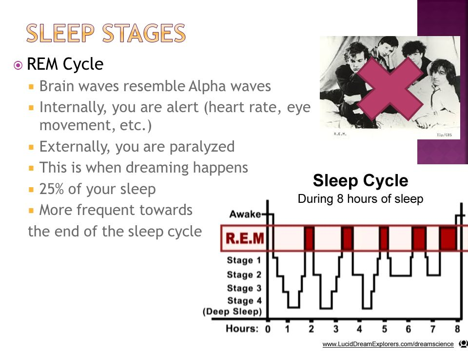  REM Cycle  Brain waves resemble Alpha waves  Internally, you are alert (heart rate, eye movement, etc.)  Externally, you are paralyzed  This is