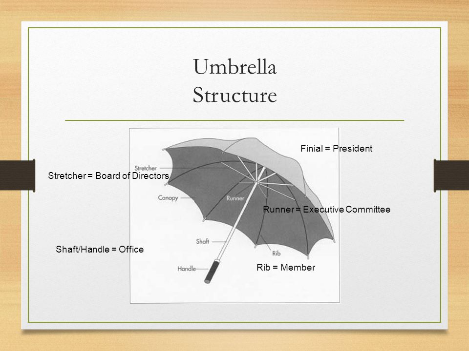 Umbrella Structure Rib = Member Stretcher = Board of Directors Finial = President Runner = Executive Committee Shaft/Handle = Office