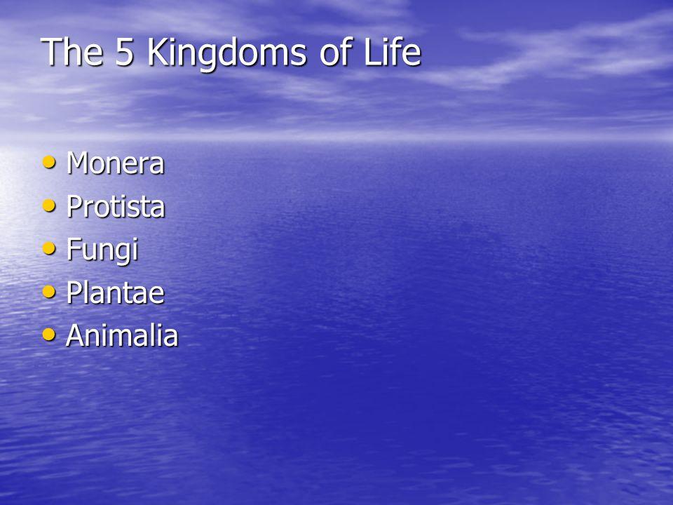 The 5 Kingdoms of Life Monera Monera Protista Protista Fungi Fungi Plantae Plantae Animalia Animalia
