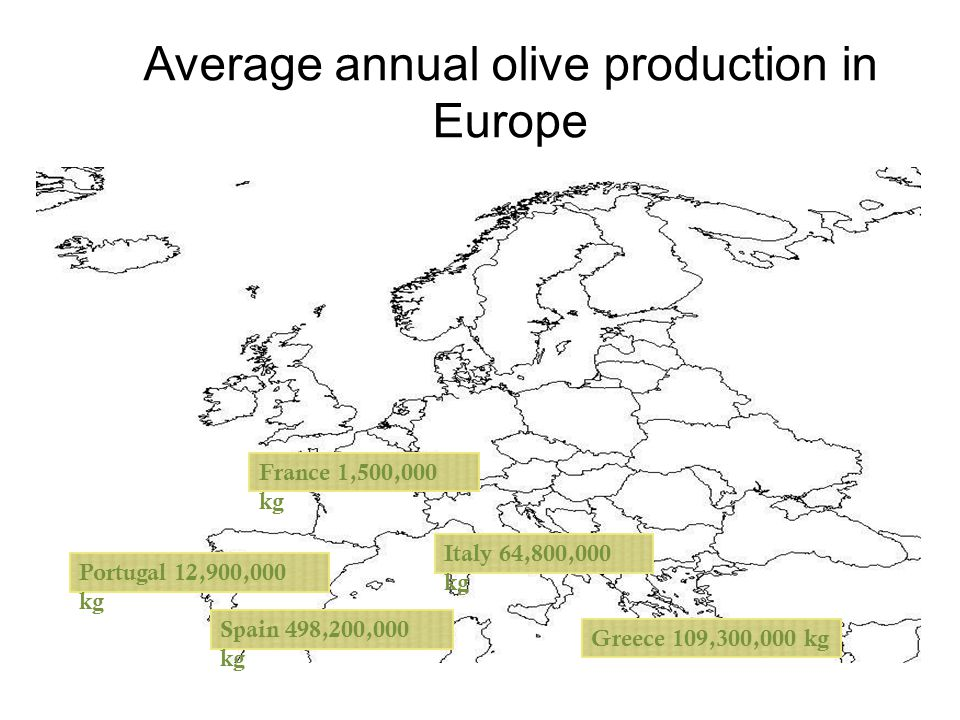 Italy 64,800,000 kg Greece 109,300,000 kgSpain 498,200,000 kg France 1,500,000 kg Average annual olive production in Europe Portugal 12,900,000 kg
