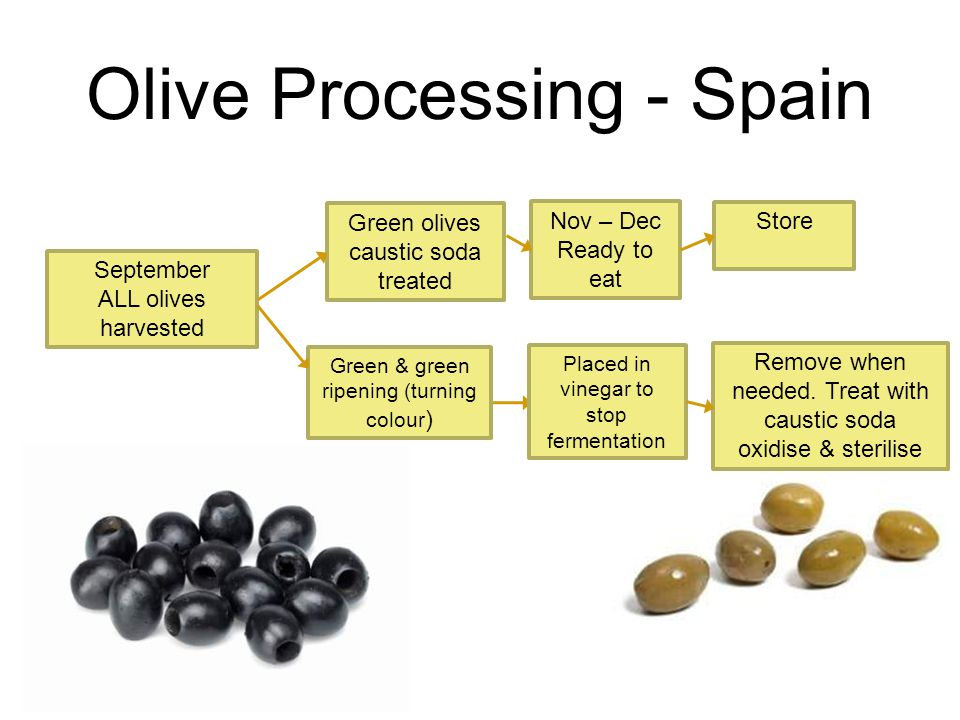 Olive Processing - Spain September ALL olives harvested Store Nov – Dec Ready to eat Green & green ripening (turning colour ) Placed in vinegar to stop fermentation Green olives caustic soda treated Remove when needed.