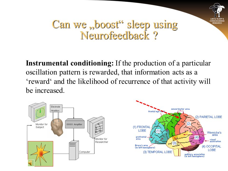 "Can we ""boost"" sleep using Neurofeedback ? o Instrumental conditioning: If the production of a particular oscillation pattern is rewarded, that inform"