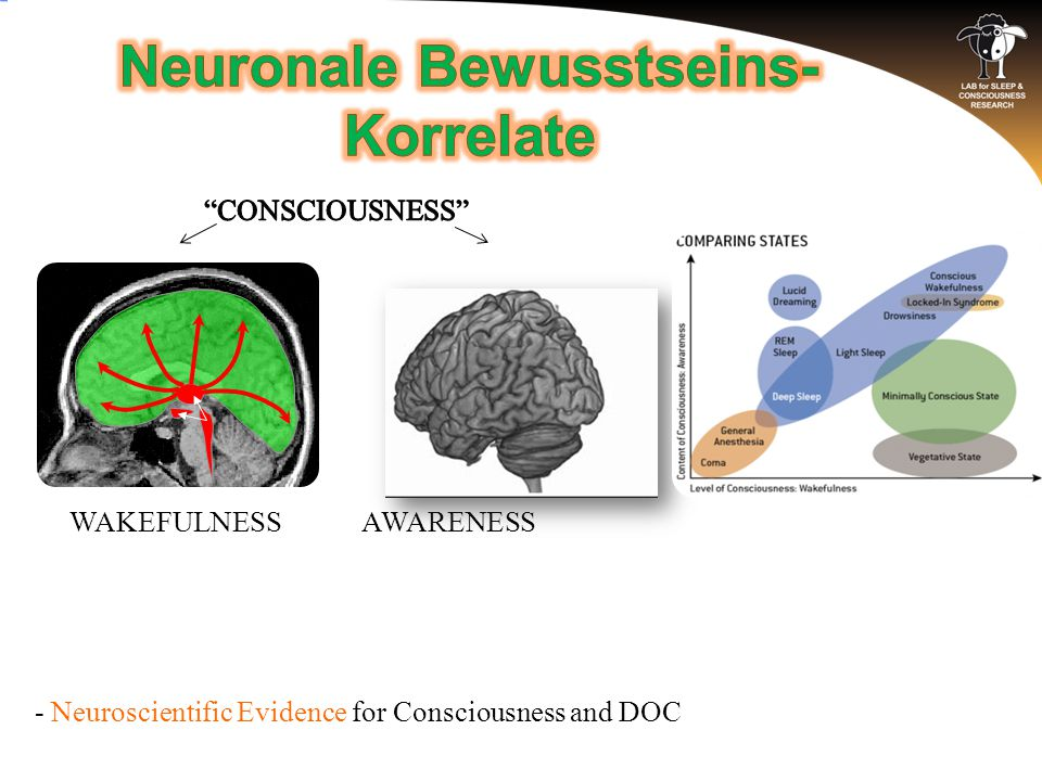 AWARENESSWAKEFULNESS - Neuroscientific Evidence for Consciousness and DOC