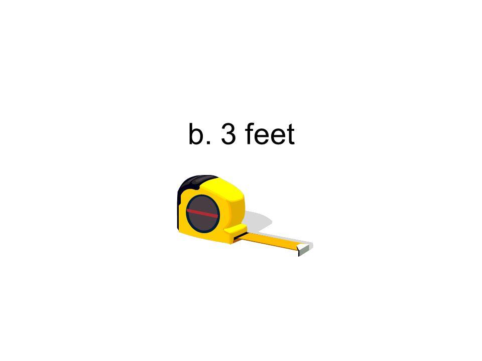 b. 3 feet