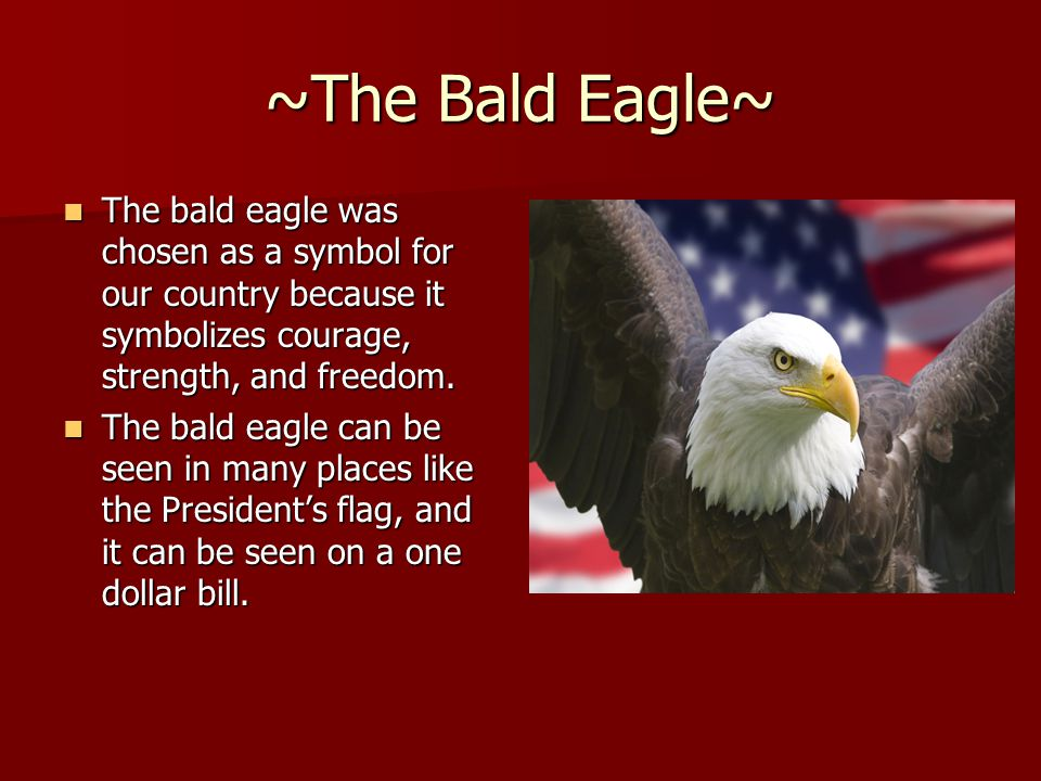 ~The Bald Eagle~ The bald eagle was chosen as a symbol for our country because it symbolizes courage, strength, and freedom. The bald eagle was chosen