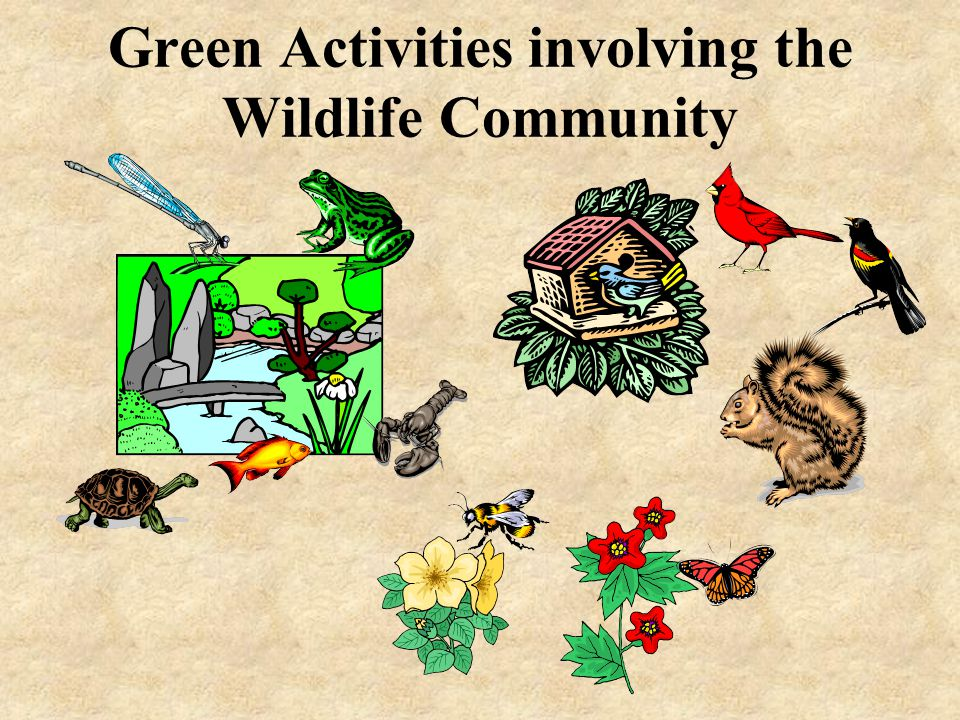 Green Activities involving the Wildlife Community