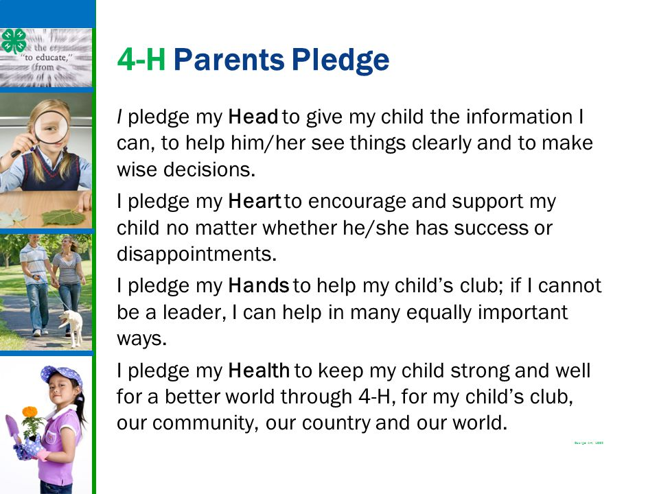 4-H Parents Pledge I pledge my Head to give my child the information I can, to help him/her see things clearly and to make wise decisions. I pledge my