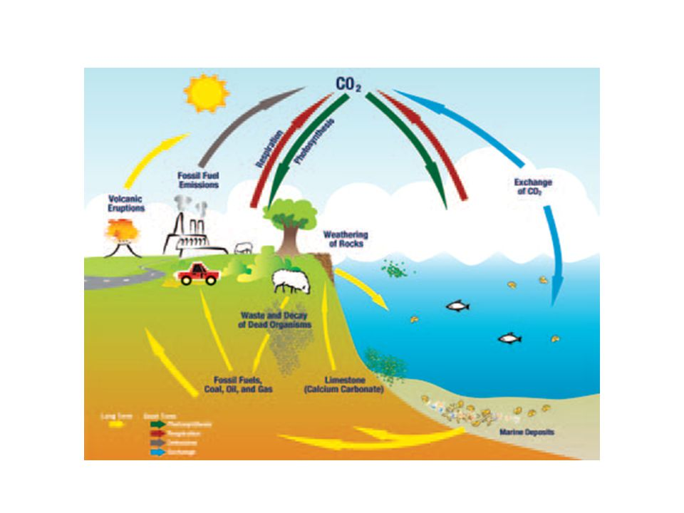 Anthropogenic Perturbation of the Global Carbon Cycle Perturbation of the global carbon cycle caused by anthropogenic activities, averaged globally for the decade 2002–2011 (PgC/yr) Source: Le Quéré et al.