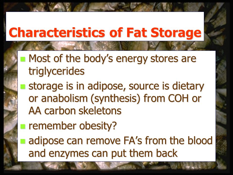 Characteristics of Fat Storage n Most of the body's energy stores are triglycerides n storage is in adipose, source is dietary or anabolism (synthesis) from COH or AA carbon skeletons n remember obesity.