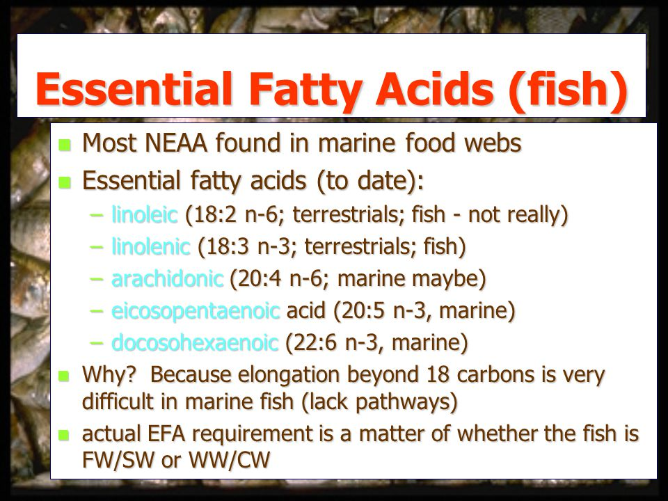 Essential Fatty Acids (fish) n Most NEAA found in marine food webs n Essential fatty acids (to date): –linoleic (18:2 n-6; terrestrials; fish - not really) –linolenic (18:3 n-3; terrestrials; fish) –arachidonic (20:4 n-6; marine maybe) –eicosopentaenoic acid (20:5 n-3, marine) –docosohexaenoic (22:6 n-3, marine) n Why.