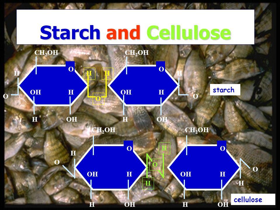 Starch and Cellulose CH 2 OH O H OH H H H CH 2 OH O H OH H H H O OO CH 2 OH O H OH H H CH 2 OH O OH H H H O O H H O starch cellulose
