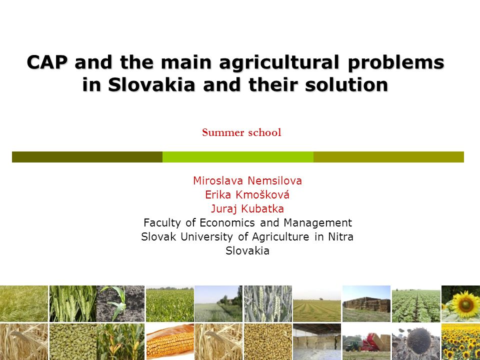12 Problem 3: high investment costs  Reason: Low price of agricultural products set aside land fund is complicated  Solution: farm must cooperate Vertical co-operation Horizontal co-operation better planning systems
