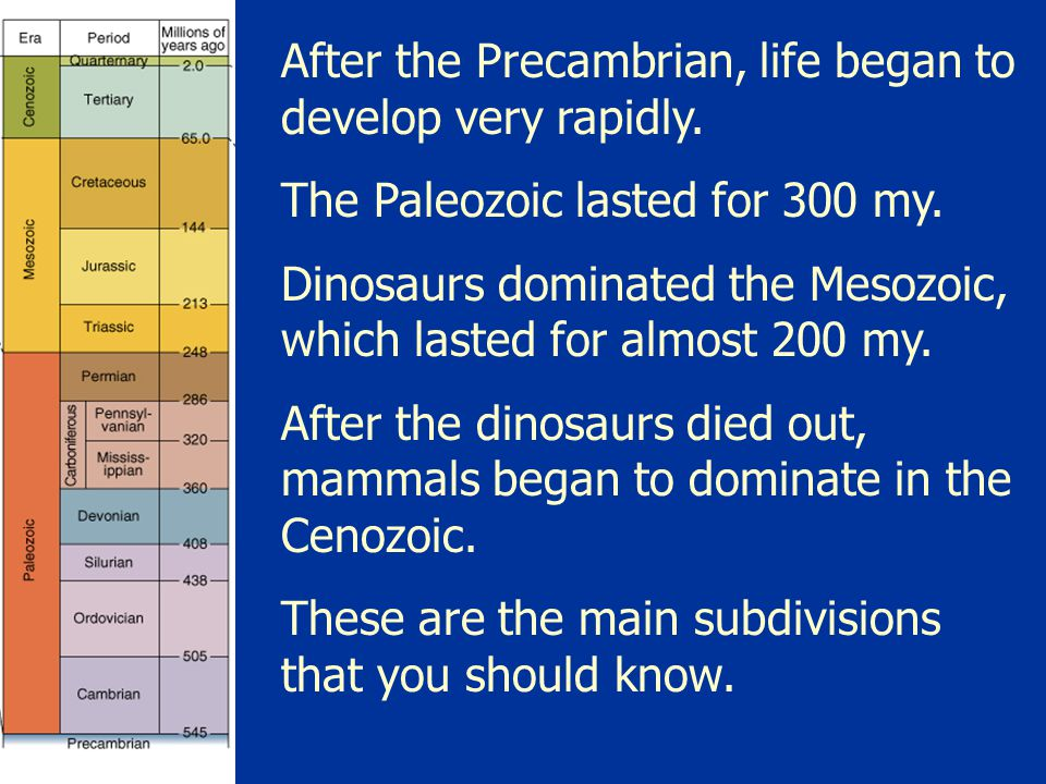 After the Precambrian, life began to develop very rapidly.