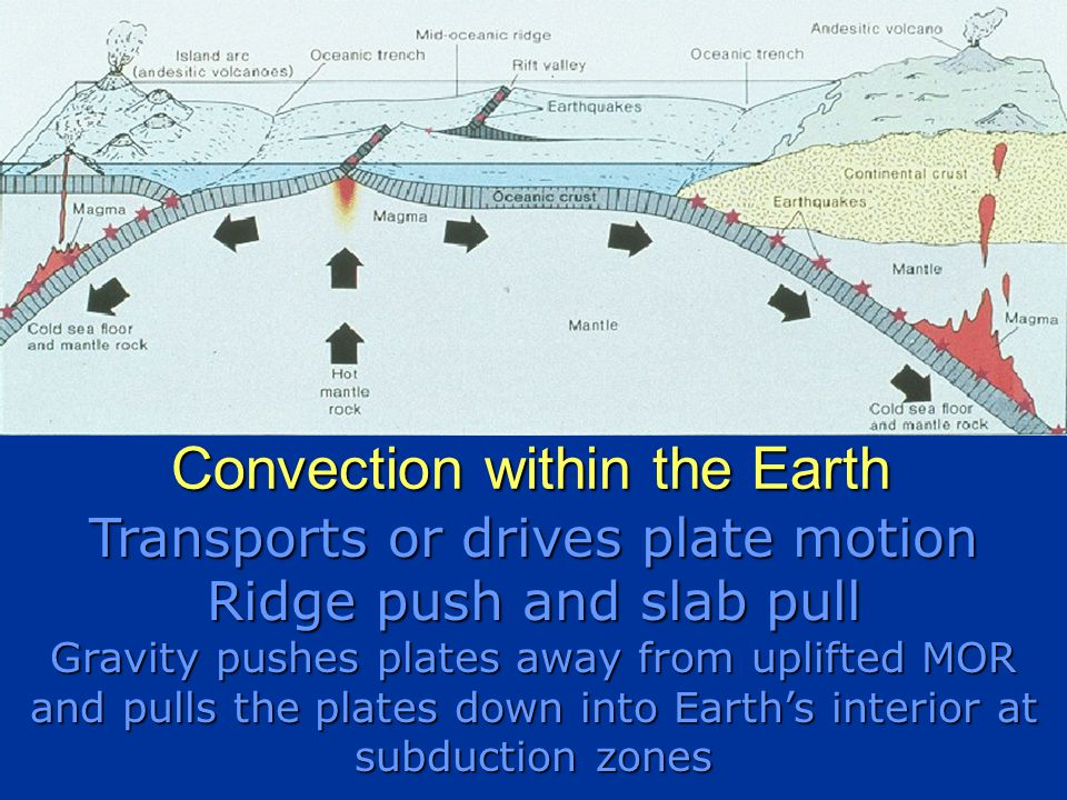Transports or drives plate motion Ridge push and slab pull Gravity pushes plates away from uplifted MOR and pulls the plates down into Earth's interior at subduction zones Convection within the Earth