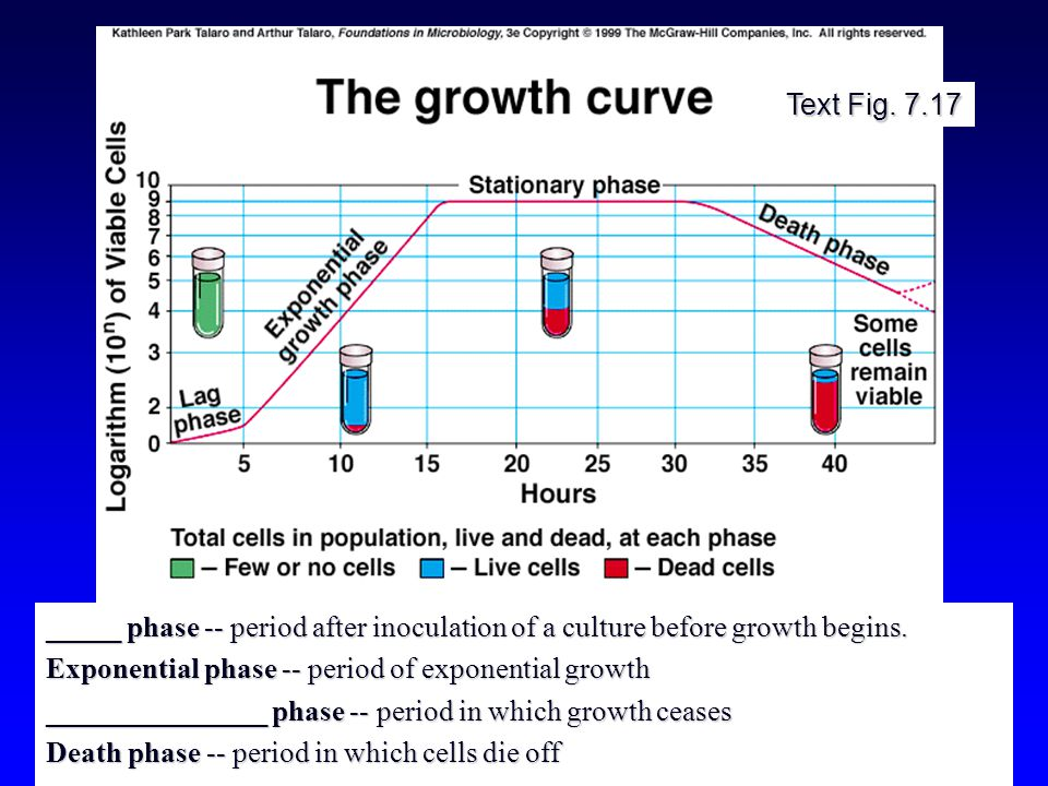 Text Fig. 7.17 _____ phase -- period after inoculation of a culture before growth begins.