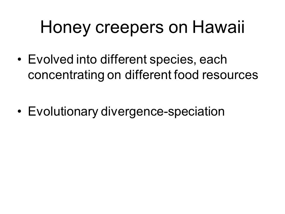 Honey creepers on Hawaii Evolved into different species, each concentrating on different food resources Evolutionary divergence-speciation