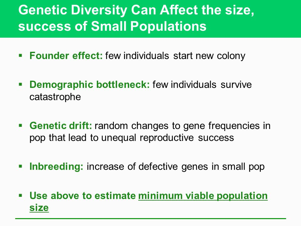 Genetic Diversity Can Affect the size, success of Small Populations  Founder effect: few individuals start new colony  Demographic bottleneck: few i