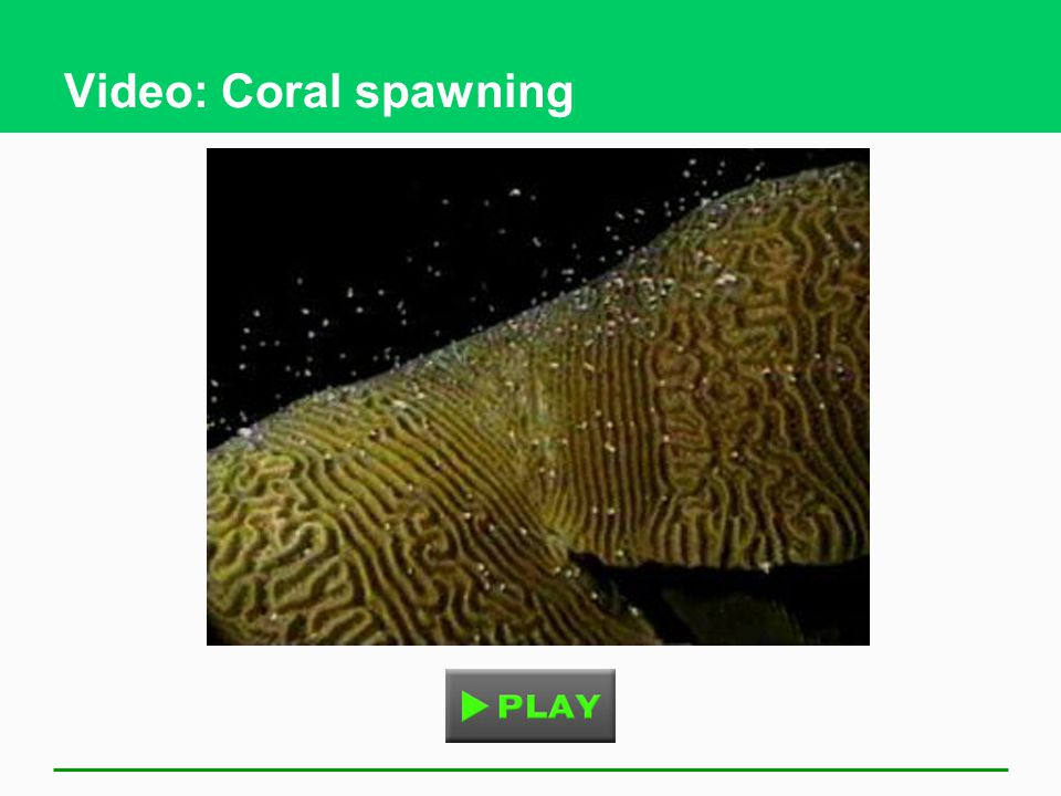 Video: Coral spawning