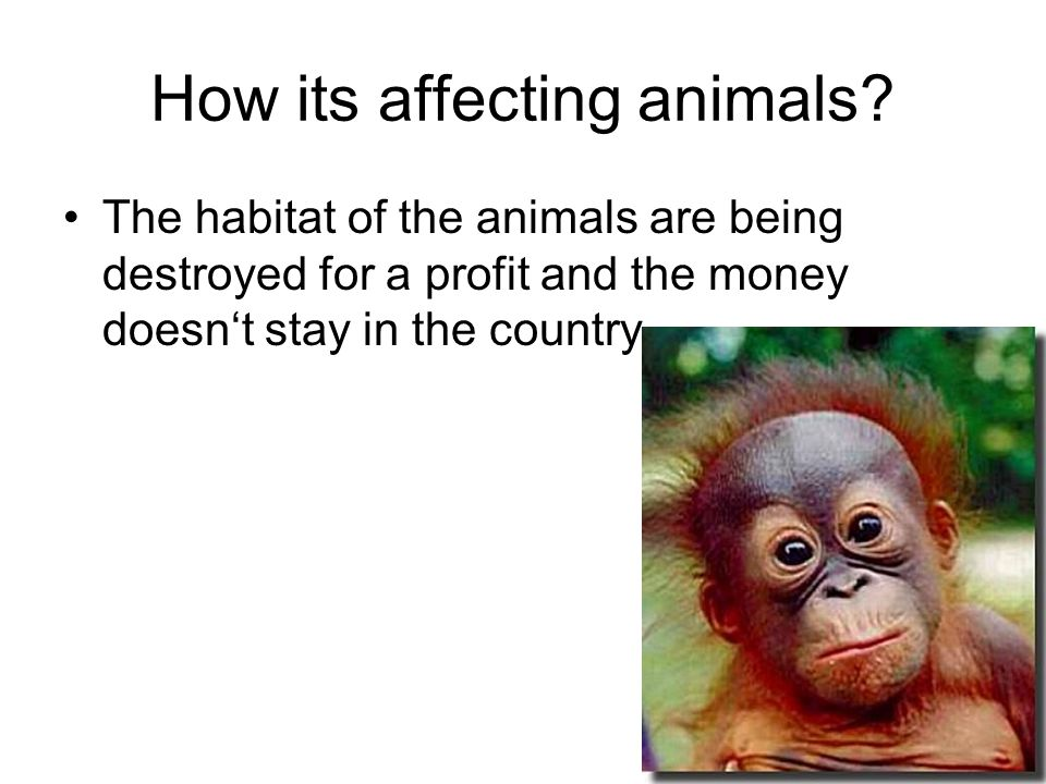 How its affecting animals.
