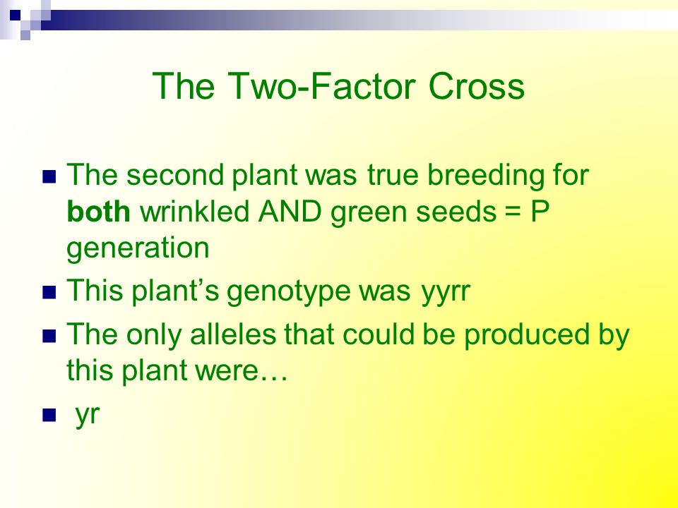 The Two-Factor Cross The second plant was true breeding for both wrinkled AND green seeds = P generation This plant's genotype was yyrr The only allel