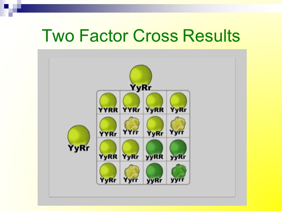 Two Factor Cross Results