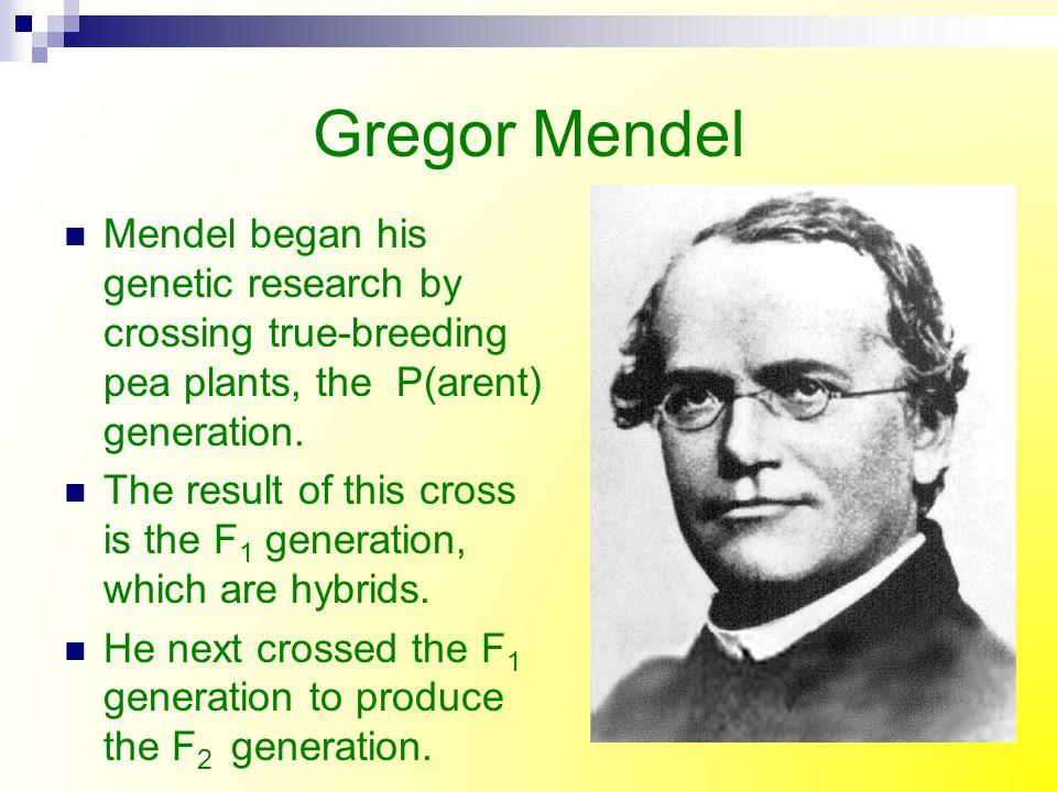 Mendel's Genetic Crosses F 1 generation F 2 generation P generation