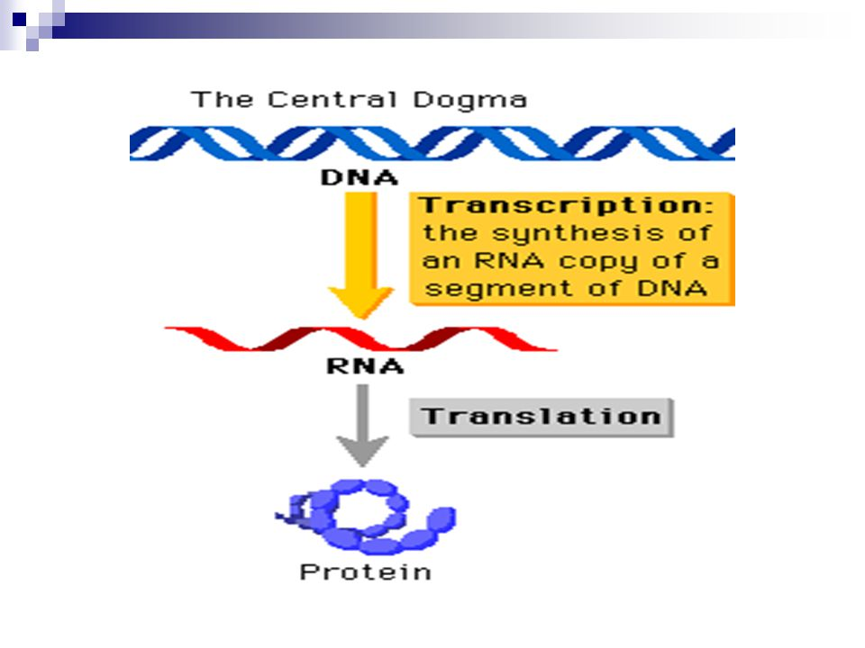 II. How does synthesis provide important organic macromolecules using six essential elements? A. Nucleic Acids 1. Carbon, hydrogen, oxygen, nitrogen,