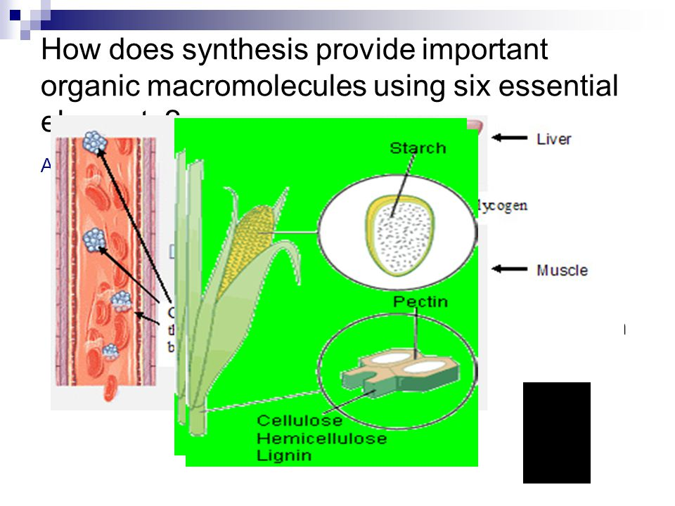 How does synthesis provide important organic macromolecules using six essential elements.