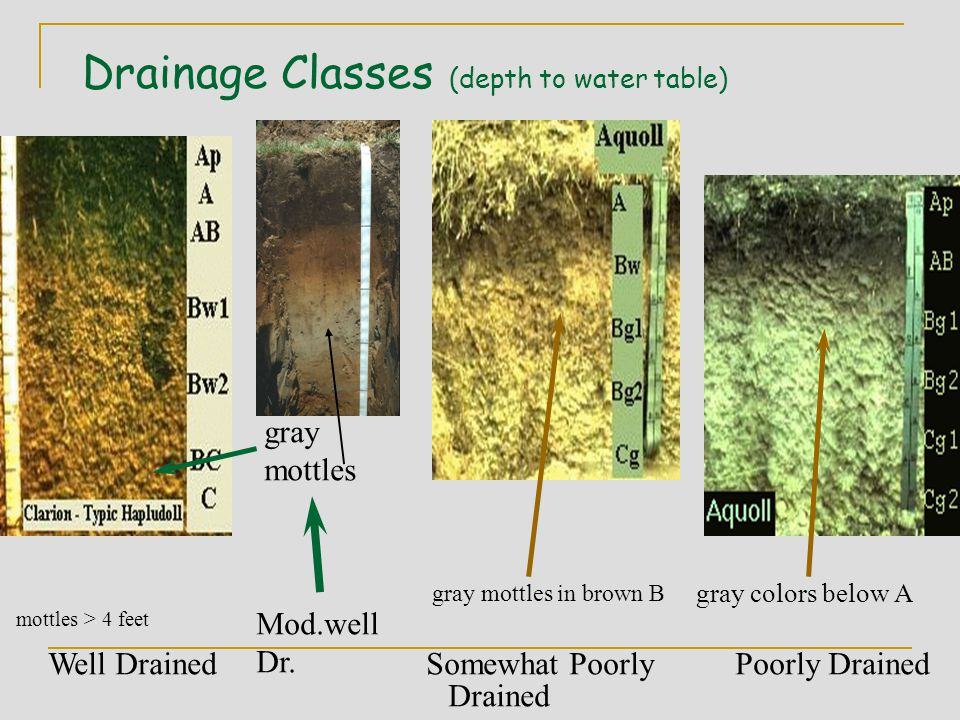Drainage Classes (depth to water table) Well Drained Somewhat Poorly Poorly Drained Drained gray colors below A gray mottles in brown B mottles > 4 feet Mod.well Dr.