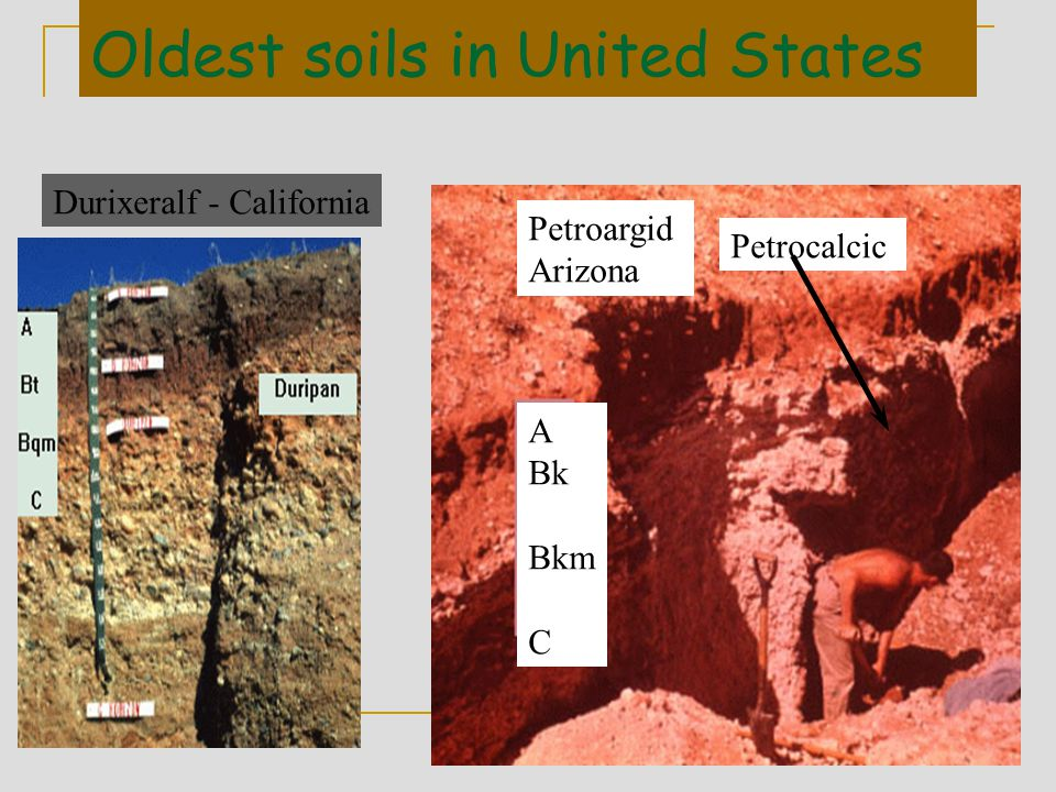 Oldest soils in United States Petrocalcic Durixeralf - California Petroargid Arizona A Bk Bkm C