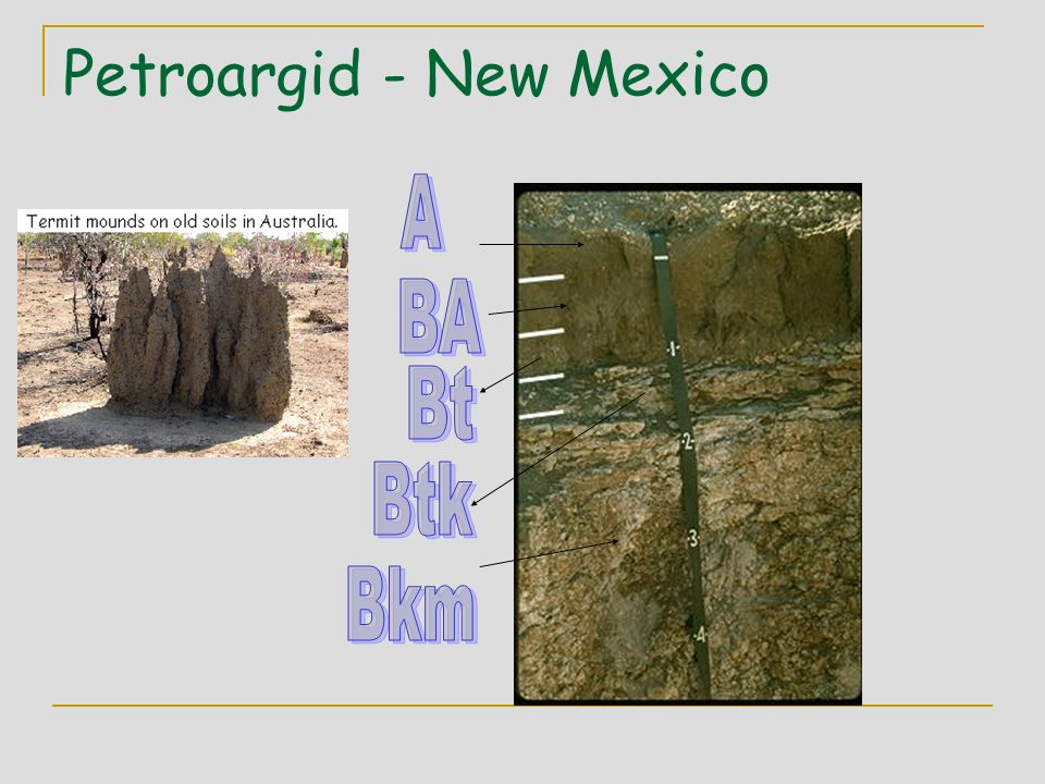 Petroargid - New Mexico