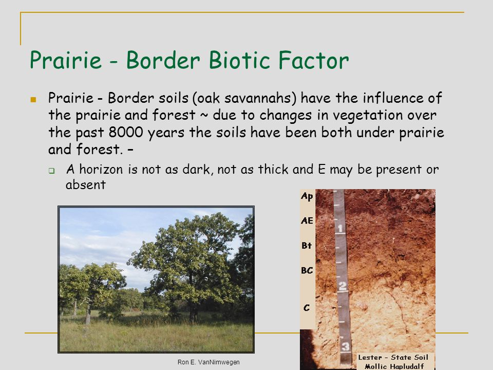 Dyad Describe your experience of being in a native or restored prairie or an old growth forest.