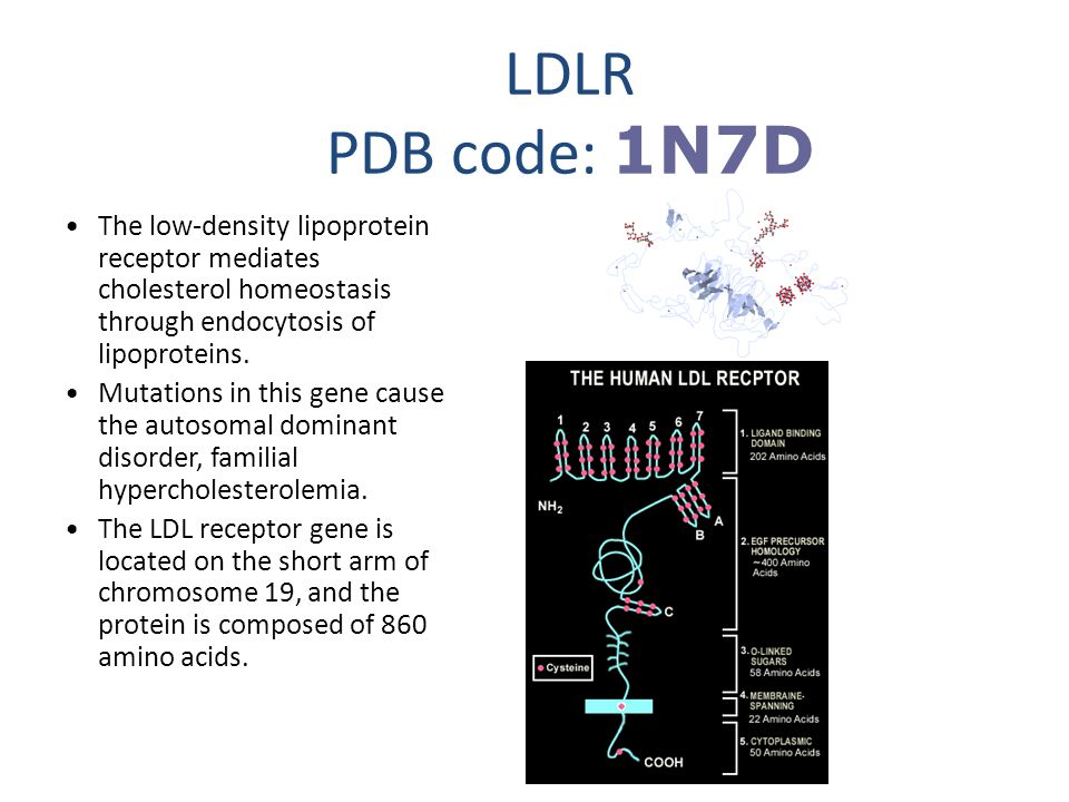 LDLR PDB code: 1N7D The low-density lipoprotein receptor mediates cholesterol homeostasis through endocytosis of lipoproteins.