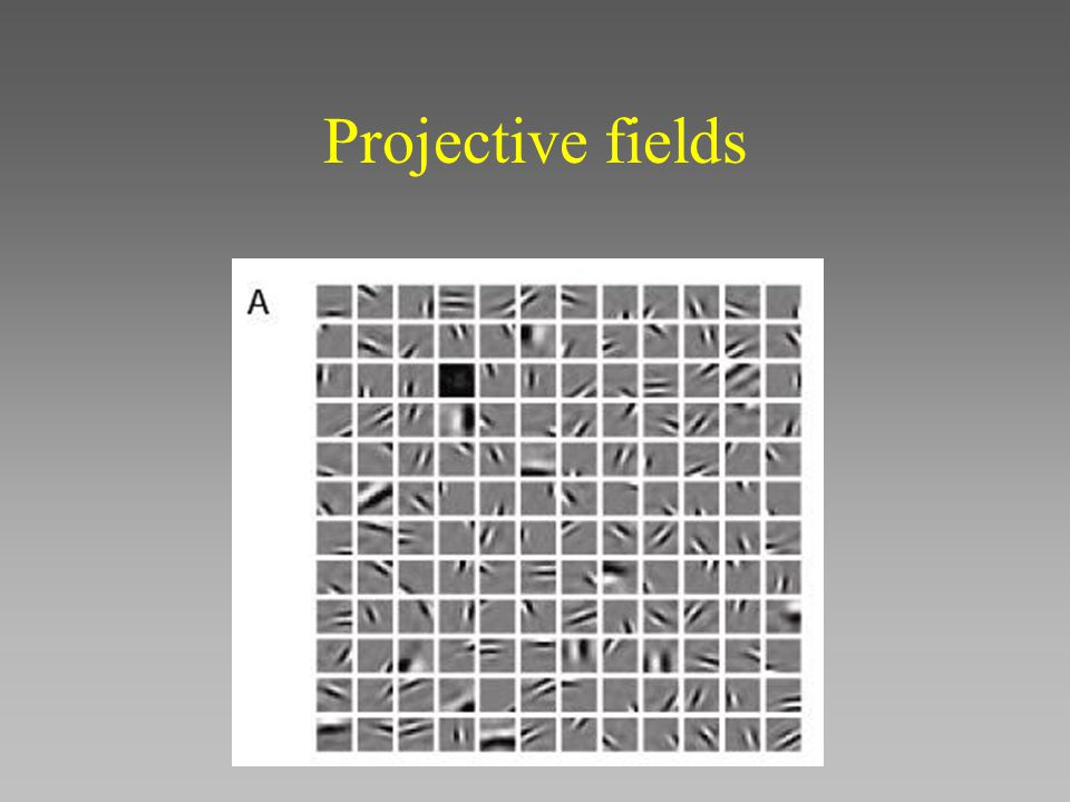 Projective fields