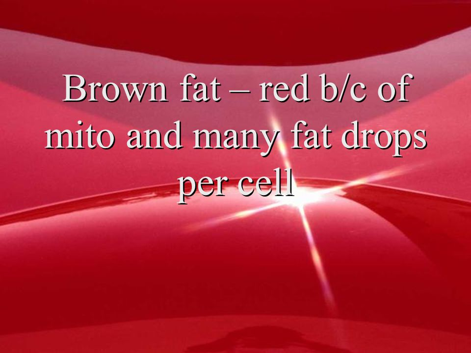 Brown fat – red b/c of mito and many fat drops per cell