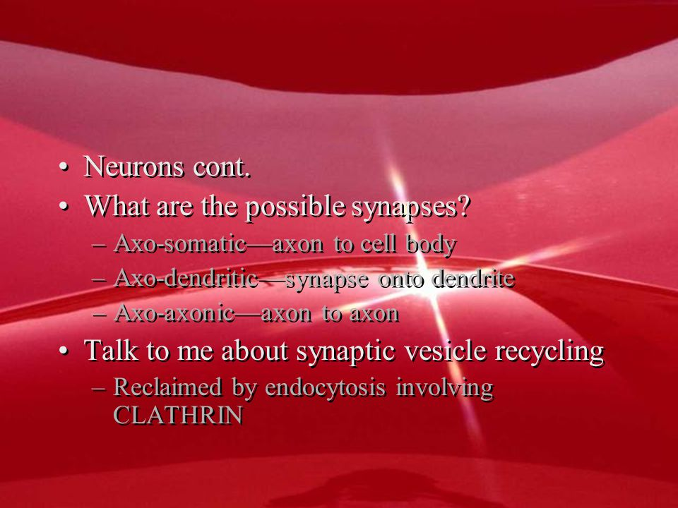 Neurons cont. What are the possible synapses.