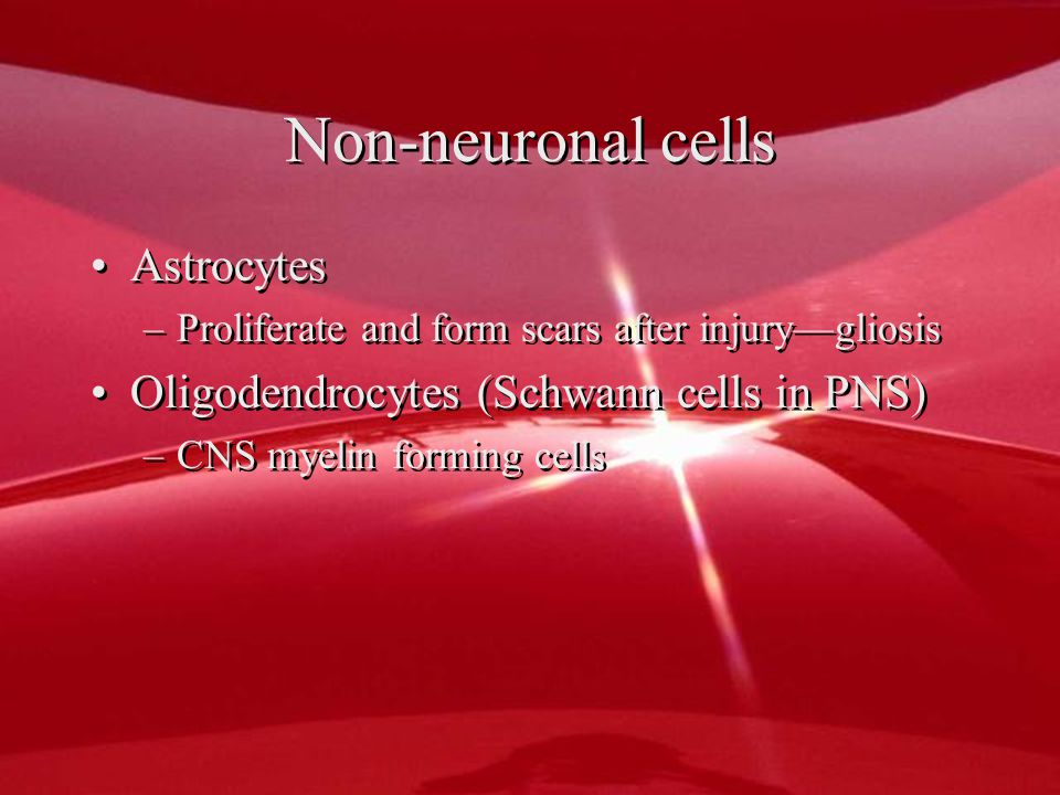 Non-neuronal cells Astrocytes –Proliferate and form scars after injury—gliosis Oligodendrocytes (Schwann cells in PNS) –CNS myelin forming cells Astrocytes –Proliferate and form scars after injury—gliosis Oligodendrocytes (Schwann cells in PNS) –CNS myelin forming cells