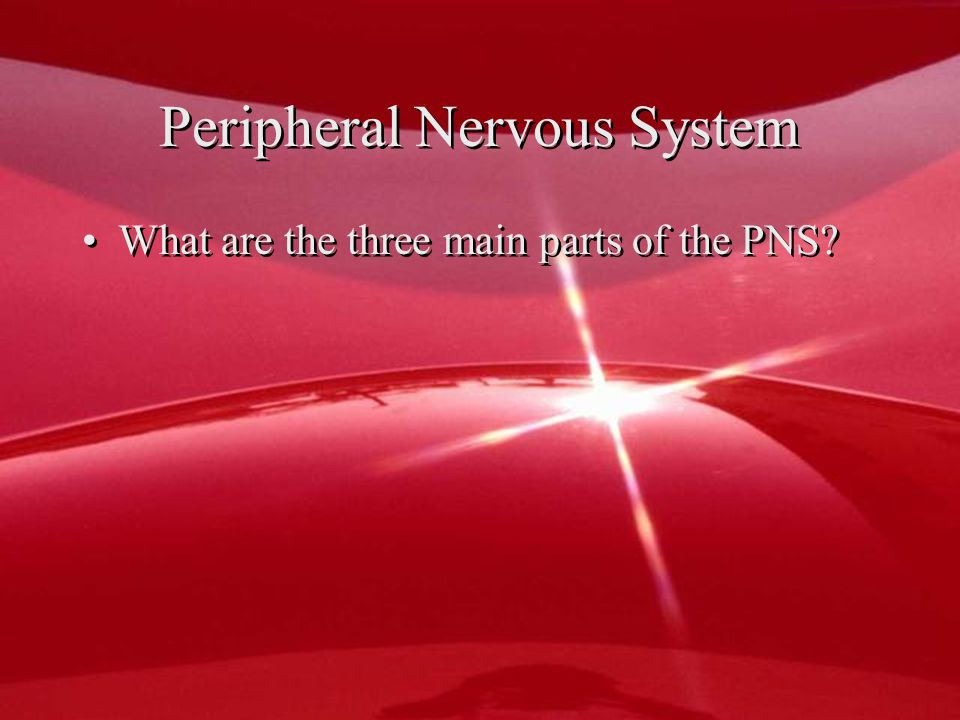 Peripheral Nervous System What are the three main parts of the PNS
