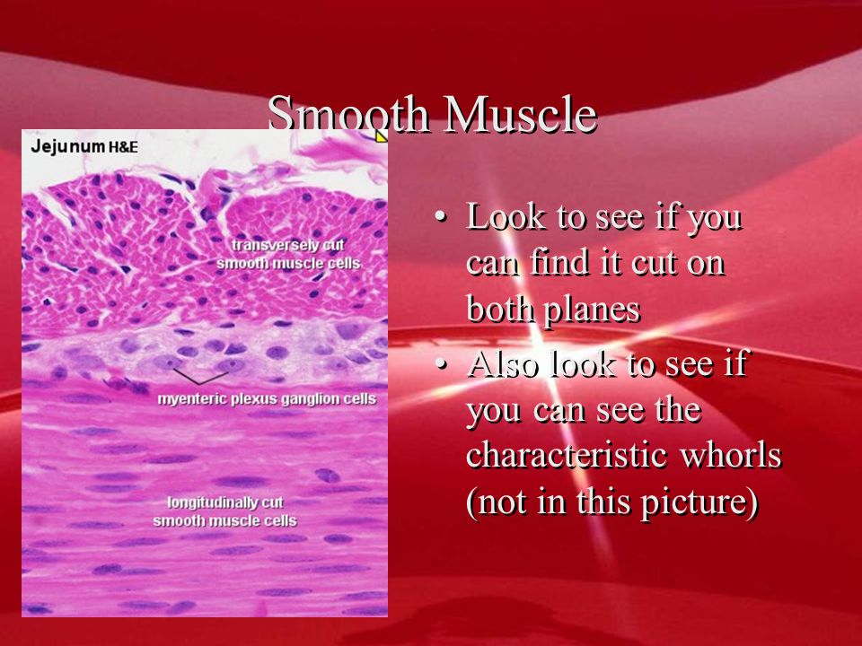 Here you see the smooth muscle going 3497319847 different ways