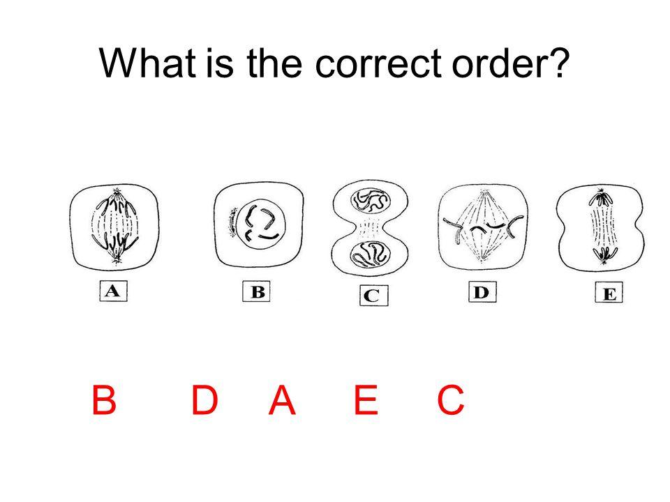 BDAEC