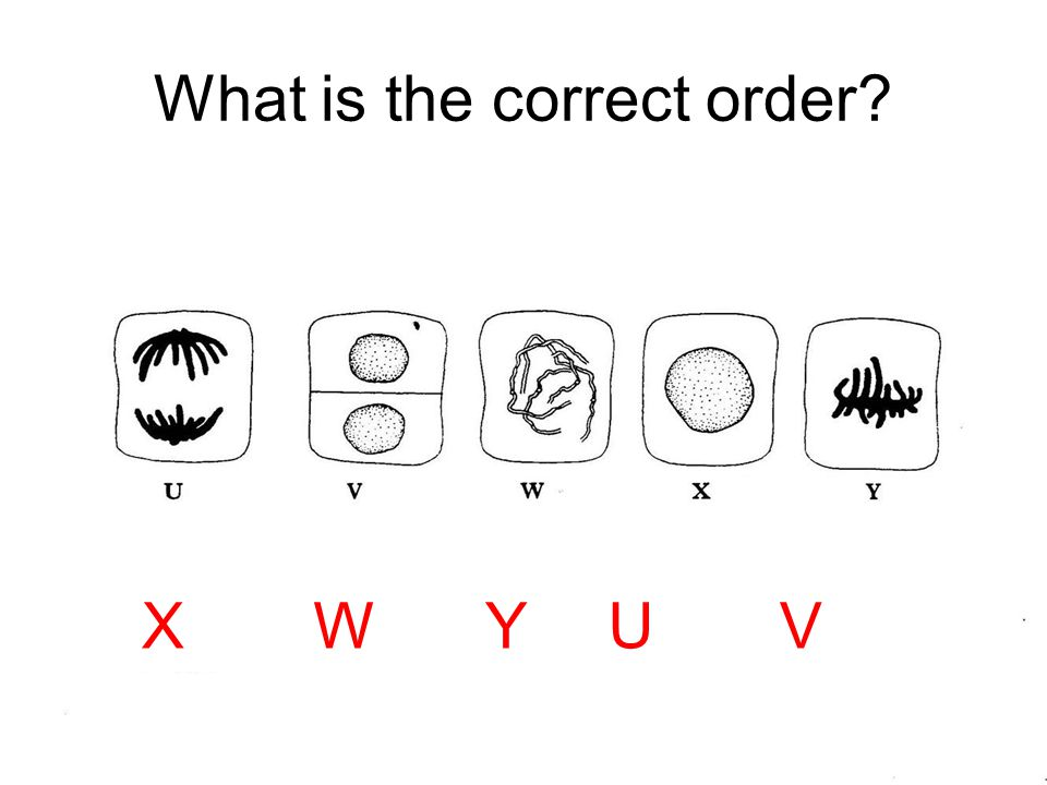 What is the correct order XWYUV