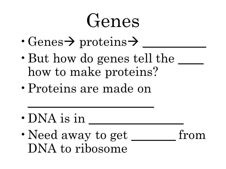 Genes Genes  proteins  __________ But how do genes tell the ____ how to make proteins.