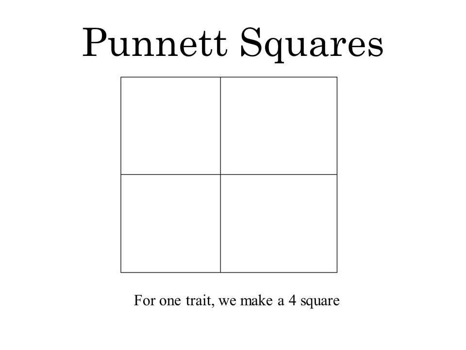 Punnett Squares For one trait, we make a 4 square