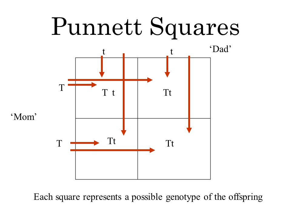 Punnett Squares Each square represents a possible genotype of the offspring T T 'Mom' 'Dad' tt Tt Tt